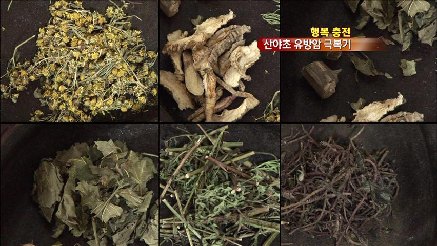 [행복충전] 강원도 산골 모녀의 '산야초 암 치유기'