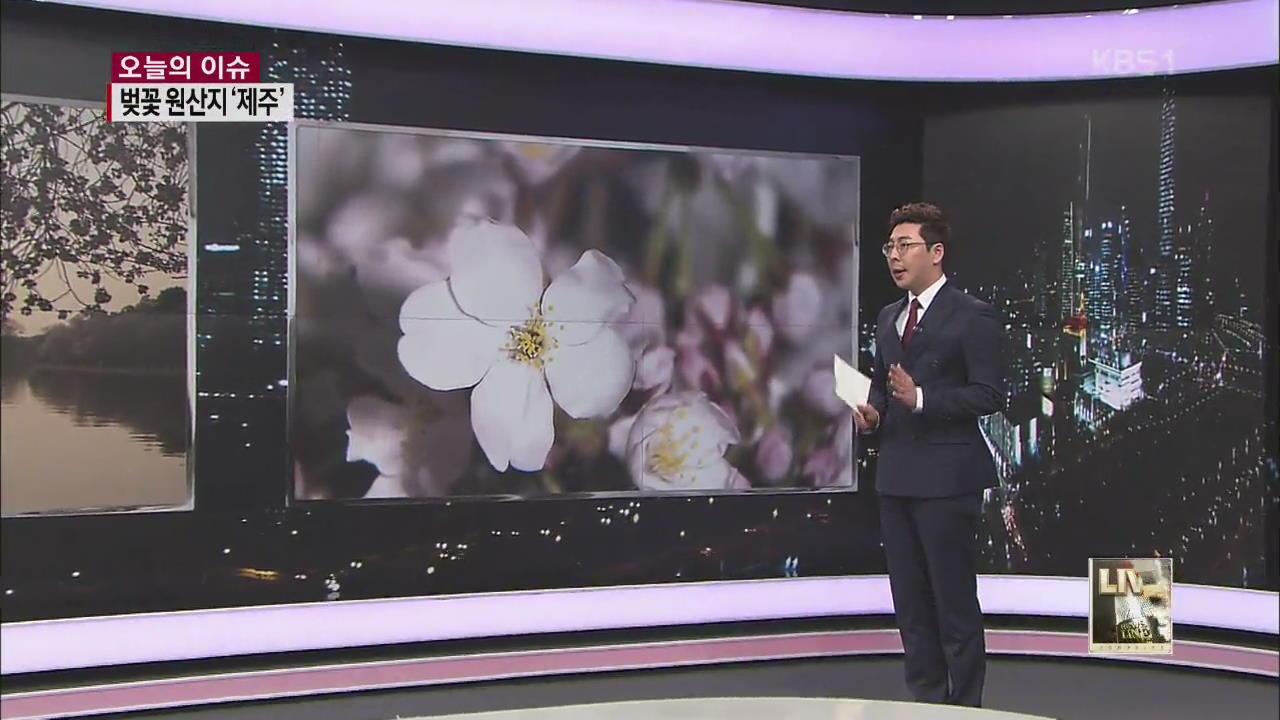 꽃의 전쟁…벚꽃 원산지는 '한국'