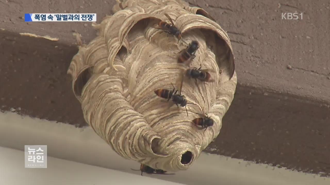 무더위에 말벌 기승…벌 쏘임 사고 속출
