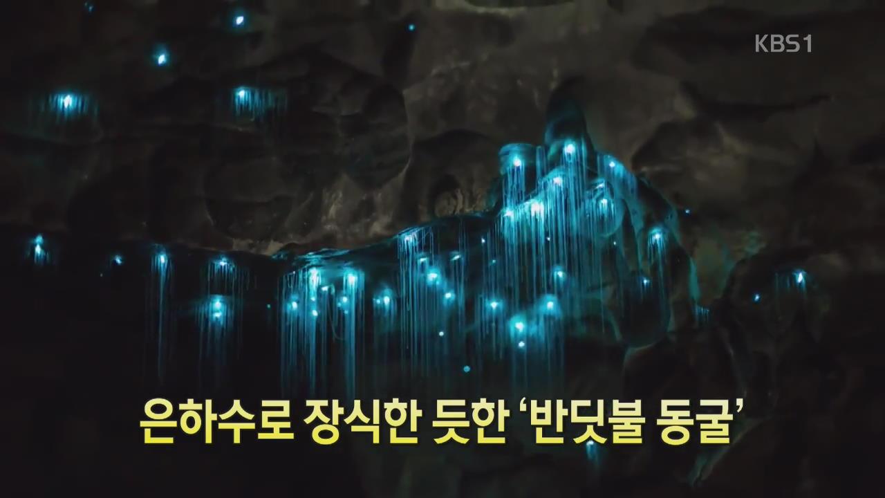 [디지털 광장] 은하수로 장식한 듯한 '반딧불 동굴'