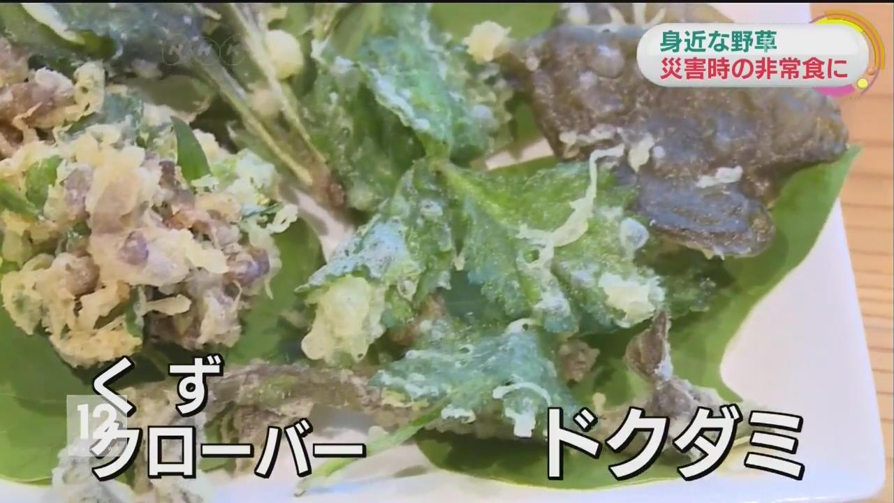 日, 들풀을 재해 비상식량으로 활용