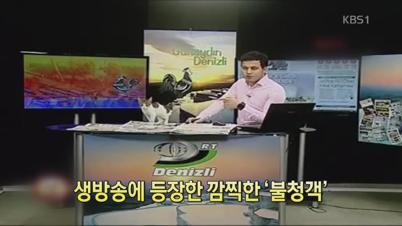 [디지털광장] 생방송에 등장한 깜찍한 '불청객'