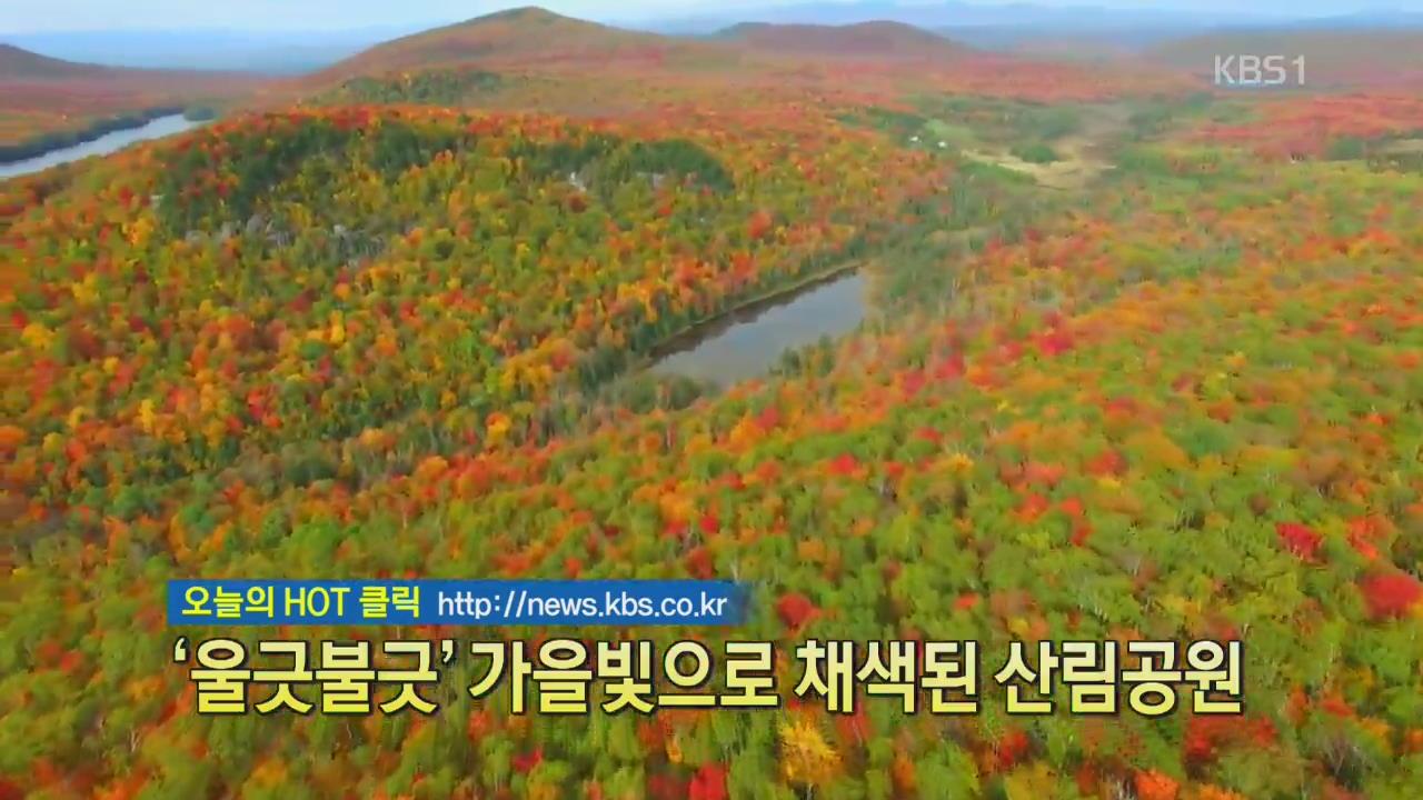 [디지털광장] '울긋불긋' 가을빛으로 채색된 산림공원