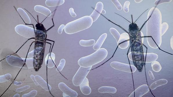 미국 텍사스 일부지역 지카바이러스 발생지역 추가