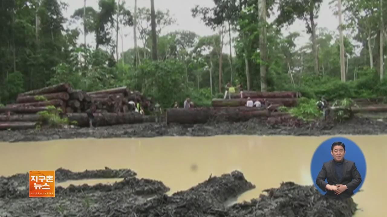 지난해 아마존 열대우림 파괴 면적 '서울시 13배'
