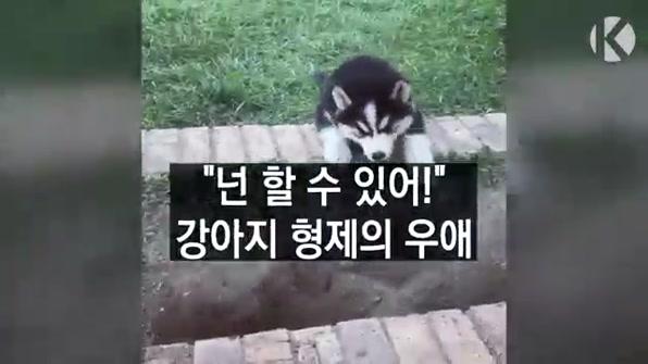 """[라인뉴스] """"넌 할 수 있어!"""" 강아지 형제의 우애"""
