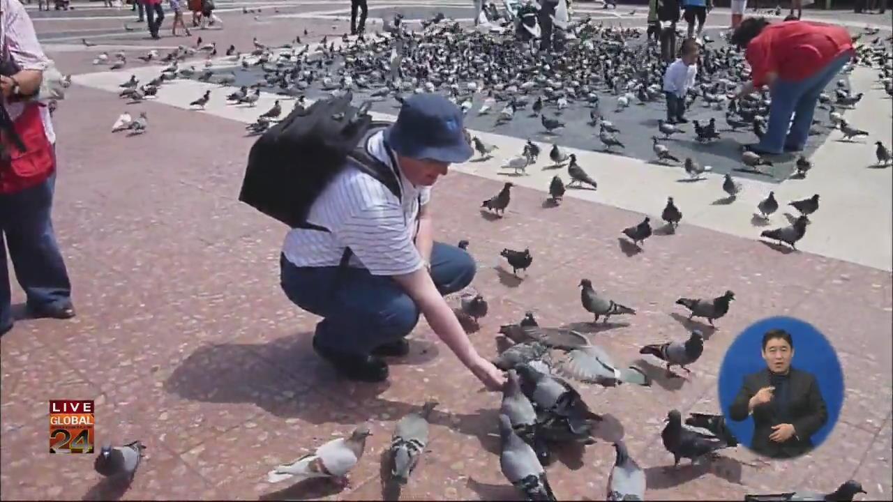 [글로벌24 주요뉴스] 스페인 비둘기떼 골치…피임약 먹여 개체수 줄인다