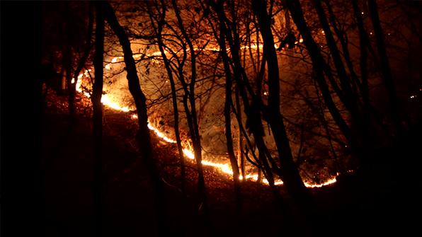 경기도 과천 야산 화재…산 300㎡ 소실