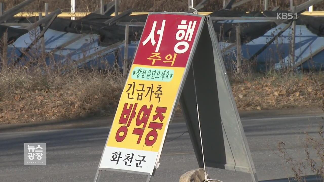 강원도까지 AI 확산…겨울 축제 '초비상'