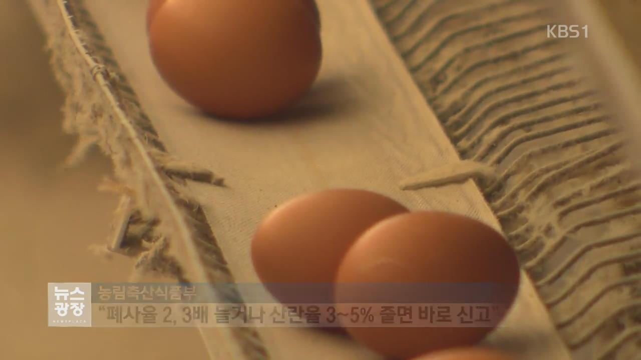달걀값 37일만에 하락…AI 신속 신고해야