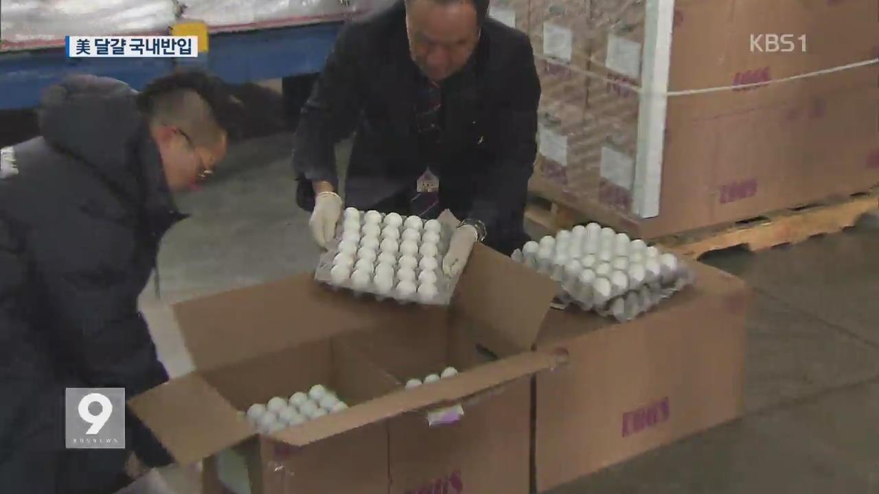 미국산 달걀 300만 개 도착…가격 하락세