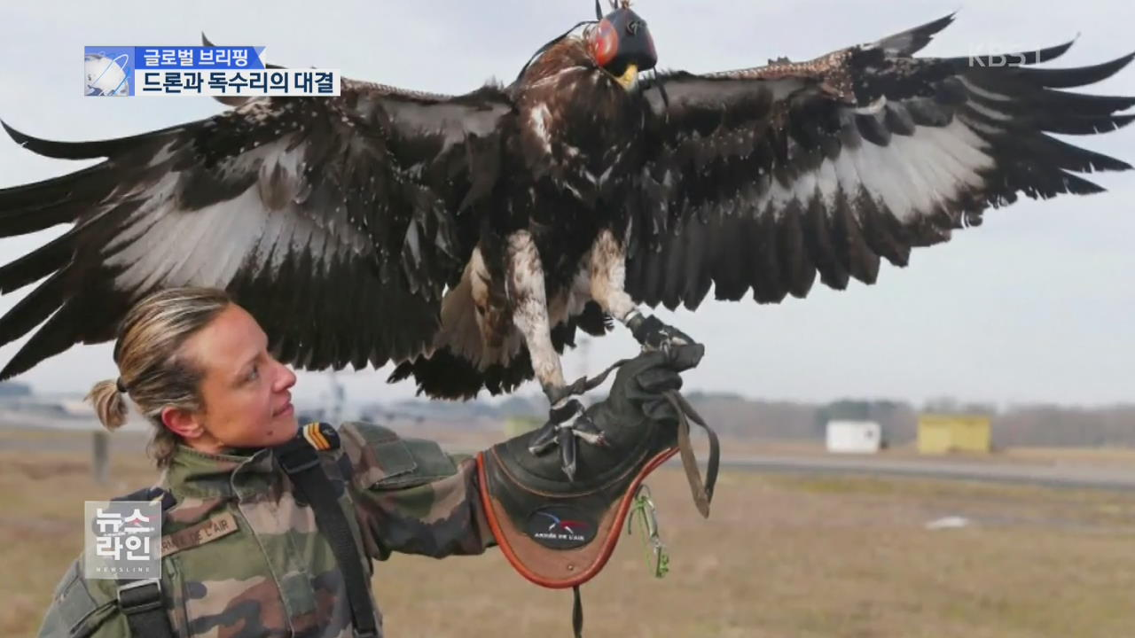 [글로벌 브리핑] '우아하고 날카롭게'…독수리의 '드론 사냥'