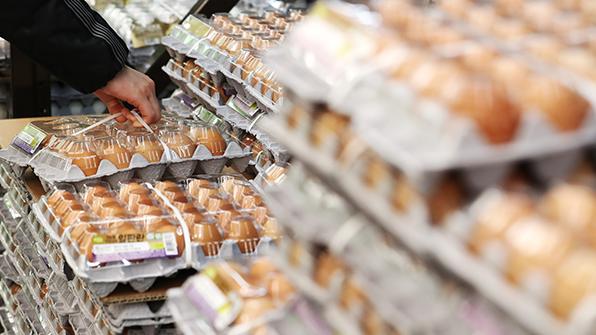 AI로 올해 외국산 달걀과 가공품 1,300t 수입