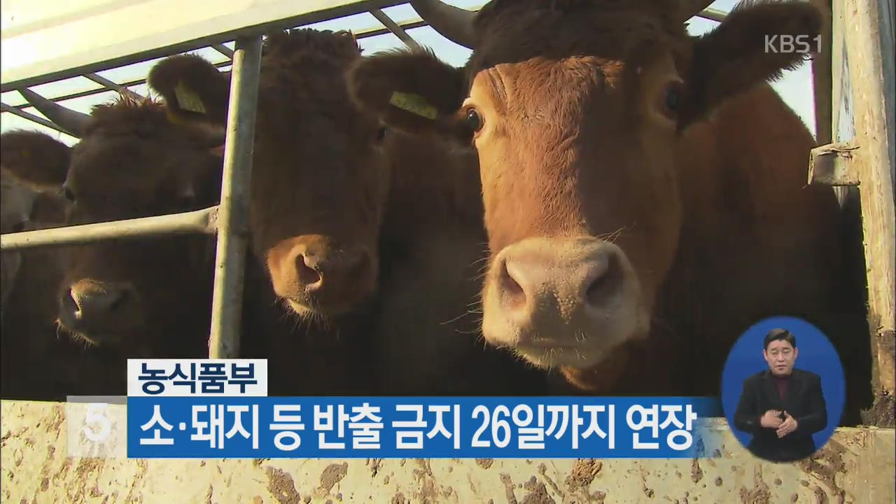 농식품부, 소·돼지 등 반출 금지 26일까지 연장