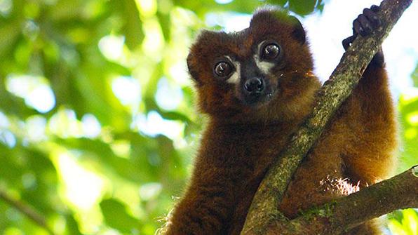'얼굴인식' 보안기술, 멸종위기 동물 보존에 쓴다