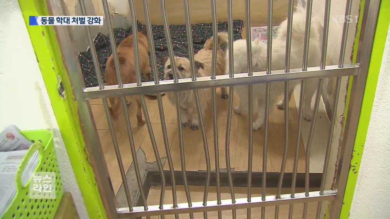 동물학대 처벌 강화…'펫파라치' 도입