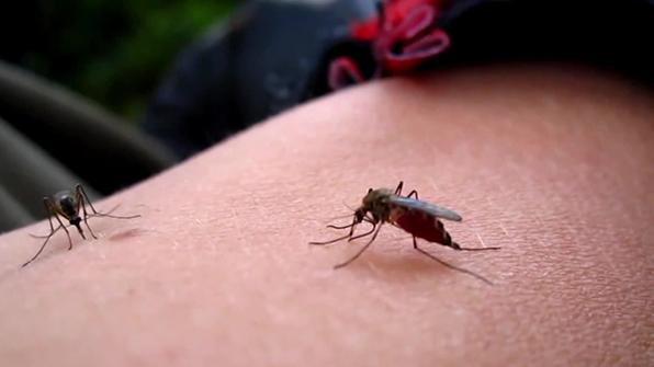 서울시, 전국 최초 '모기 유충조사반' 가동