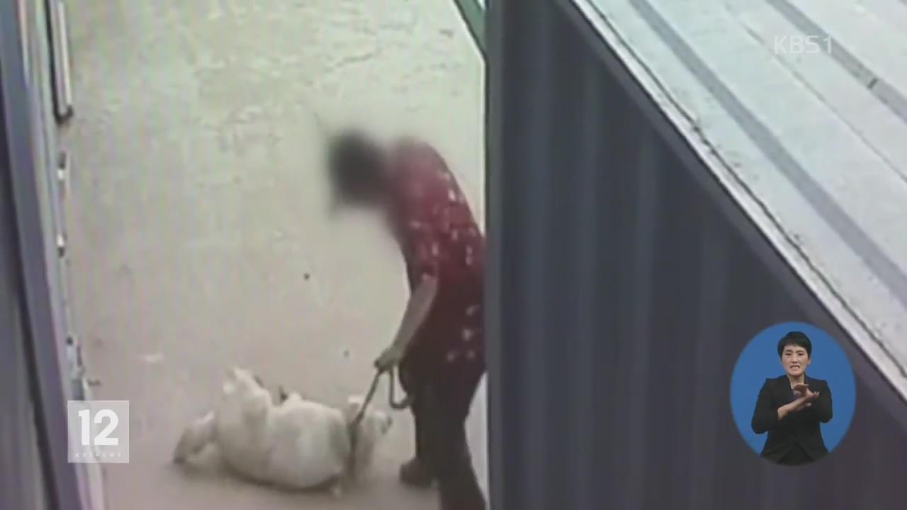 2020년 6조 시장…동물 학대 처벌 강화