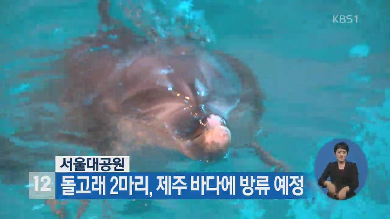 서울대공원, 돌고래 2마리 제주 바다에 방류 예정