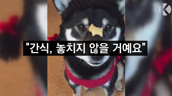 """[라인뉴스] """"간식, 놓치지 않을 거예요"""""""