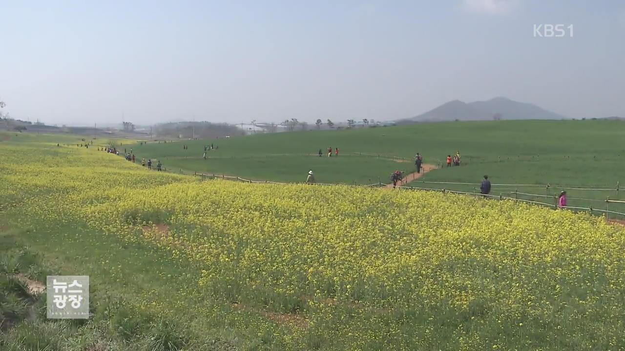 '봄기운 가득'…고창 청보리밭 축제