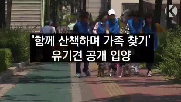 """[라인뉴스] """"새 가족 찾아요!""""…유기견 공개 입양"""