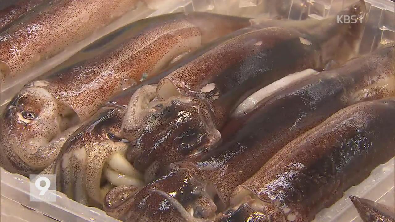 '금징어' 된 오징어…정부 3천3백 톤 공급