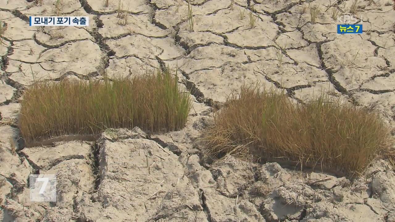 가뭄 장기화…전남서도 모내기 포기 속출