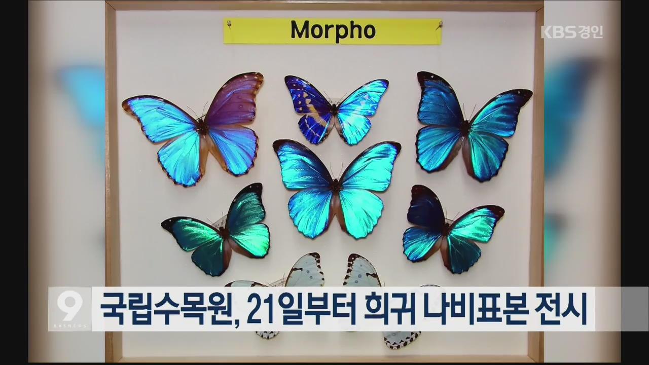 국립수목원, 21일부터 희귀 나비표본 전시