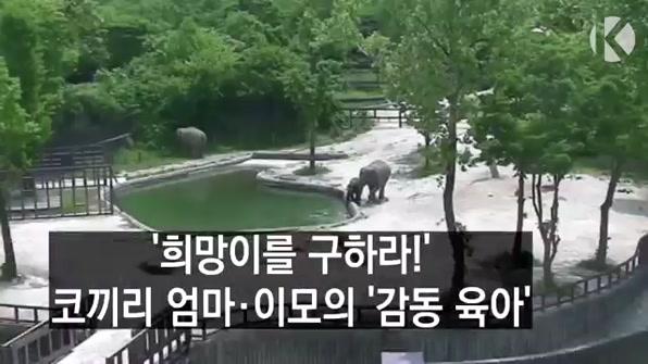 [라인뉴스] '희망이를 구하라!'…코끼리 엄마·이모의 '감동 육아'