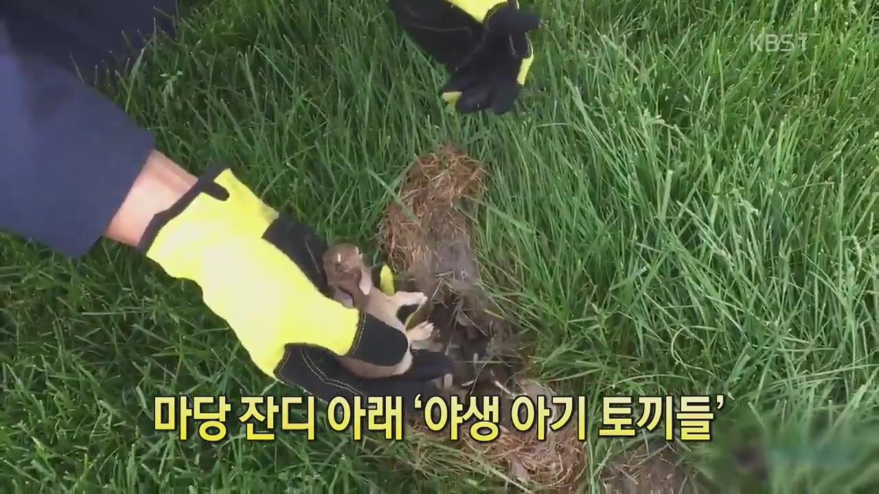 [디지털 광장] 마당 잔디 아래 '야생 아기 토끼들'