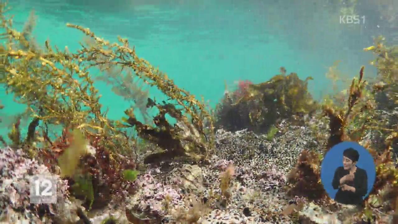 해조류 채취 안 했더니…되살아난 바다