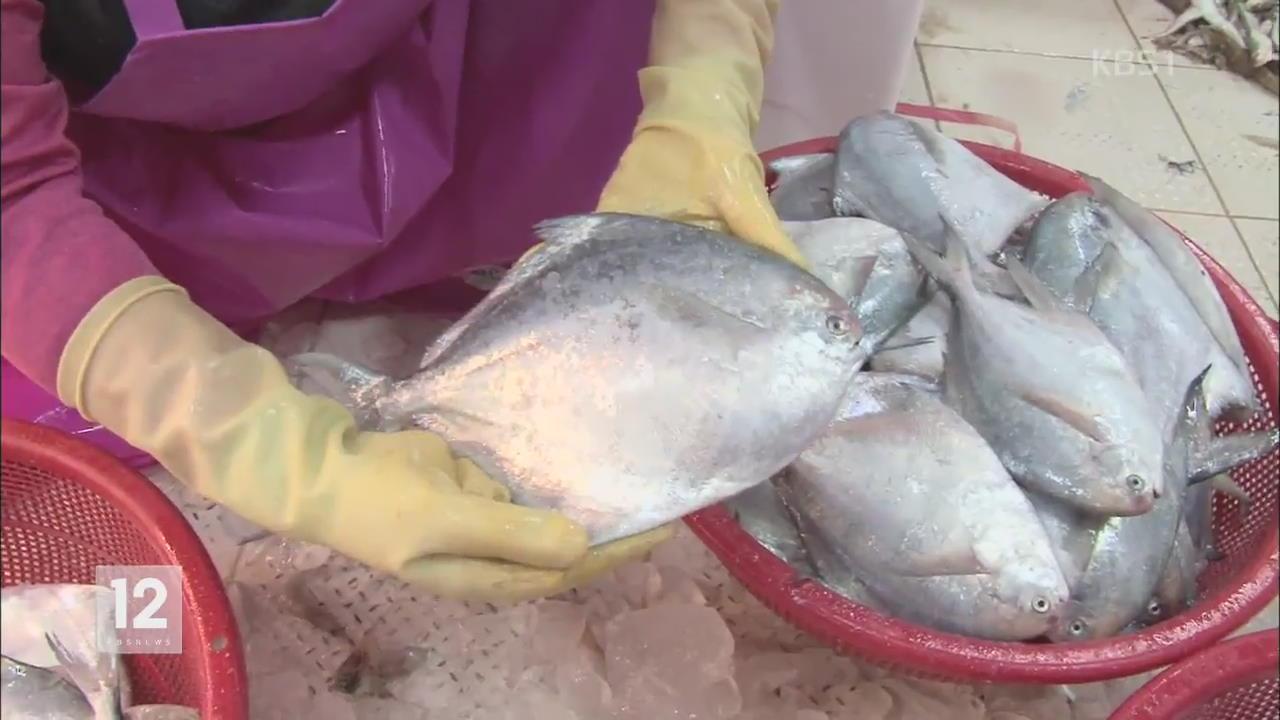 [정보충전] 제철 음식 '병어' 선별·요리법