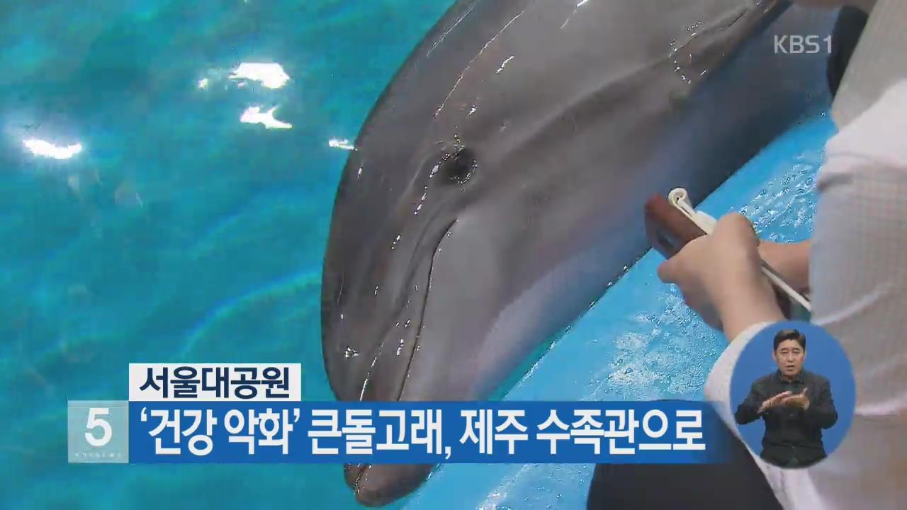 서울대공원 '건강 악화' 큰돌고래, 제주 수족관으로