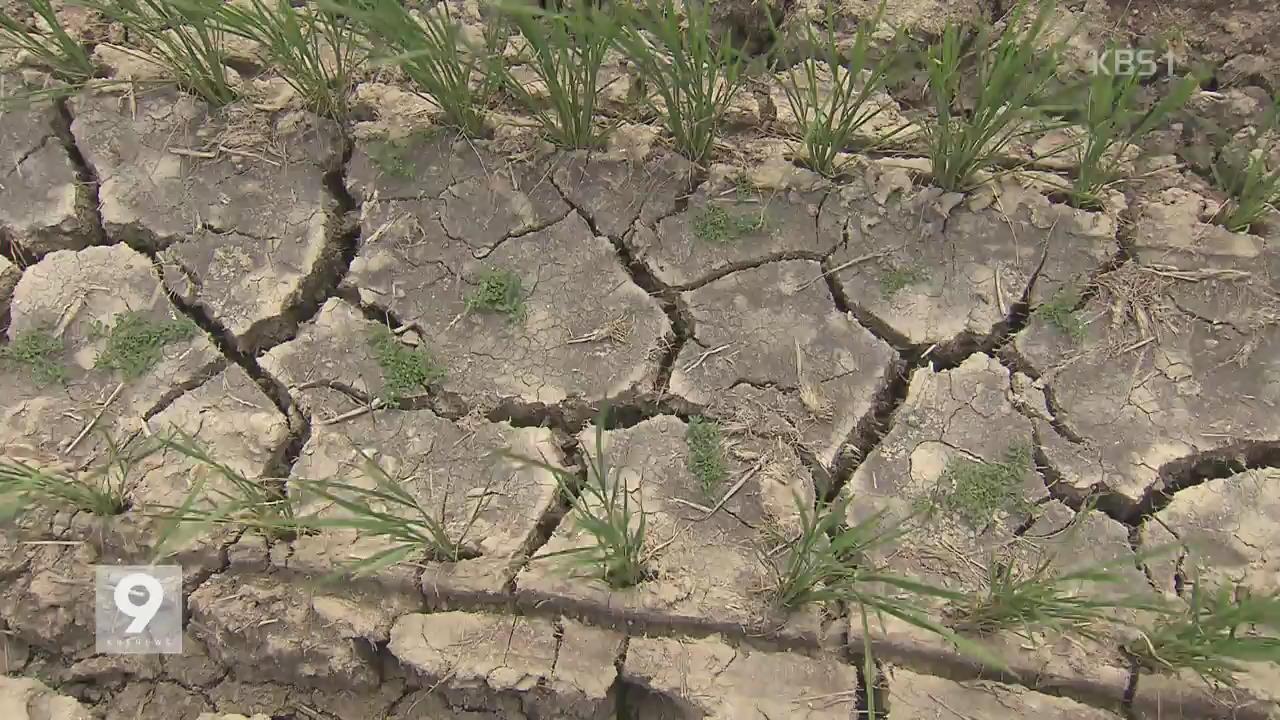 바짝 마른 포항…장마철에도 가뭄 걱정