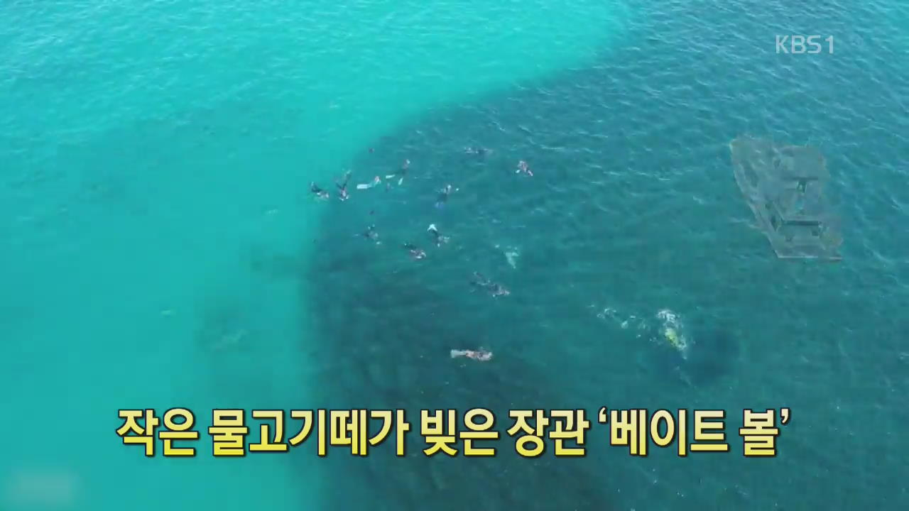 [디지털 광장] 작은 물고기떼가 빚은 장관 '베이트 볼'