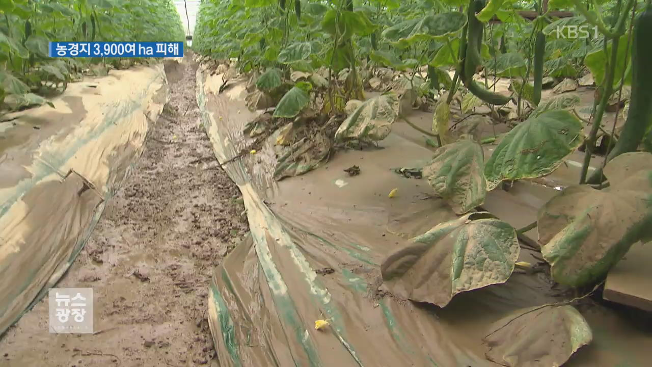 농경지 피해 극심…농민들 '망연자실'