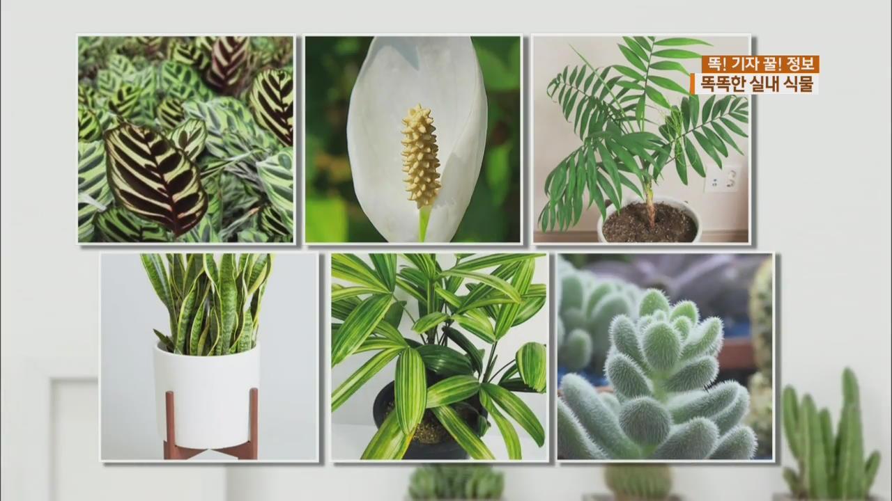 [똑! 기자 꿀! 정보] 덥고 습한 여름…실내 식물로 쾌적하게