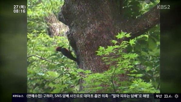 사라진 크낙새…물방개도 멸종 위기