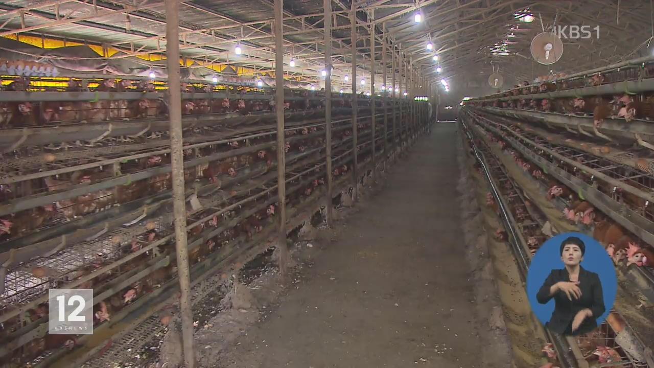 '살충제 달걀' 농장 3곳 추가…52곳으로 늘어