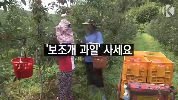[라인뉴스] '보조개 과일' 사세요…우박 피해를 하늘의 선물로
