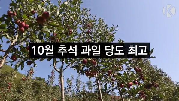[라인뉴스] 8년만의 10월 추석…과일 당도 역대 최고