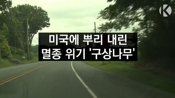 [라인뉴스] '멸종위기' 한국 토종 구상나무 미국에서 자란다.