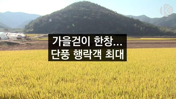 [라인뉴스] 가을걷이 한창…단풍 행락객 최대