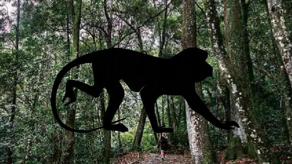 상파울루서 모기 전염 '황열병'에 죽은 원숭이 발견