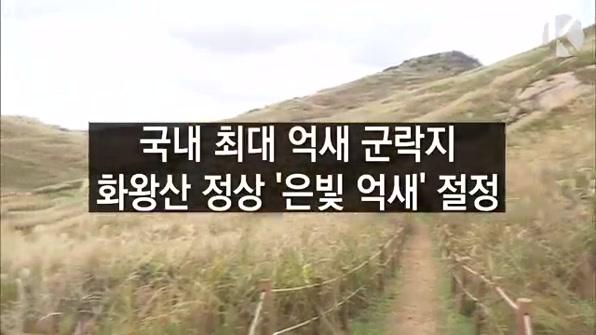 [라인뉴스] 창녕 화왕산 정상…'은빛 억새' 절정