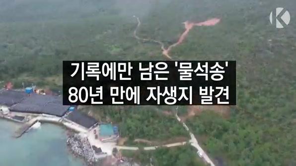 [라인뉴스] 기록에만 남은 '물석송', 80년만에 자생지 발견