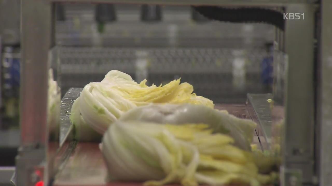 본격적인 김장철…절임배추 주문량 급증