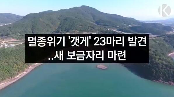 [라인뉴스] 멸종위기 '갯게' 새 보금자리 마련