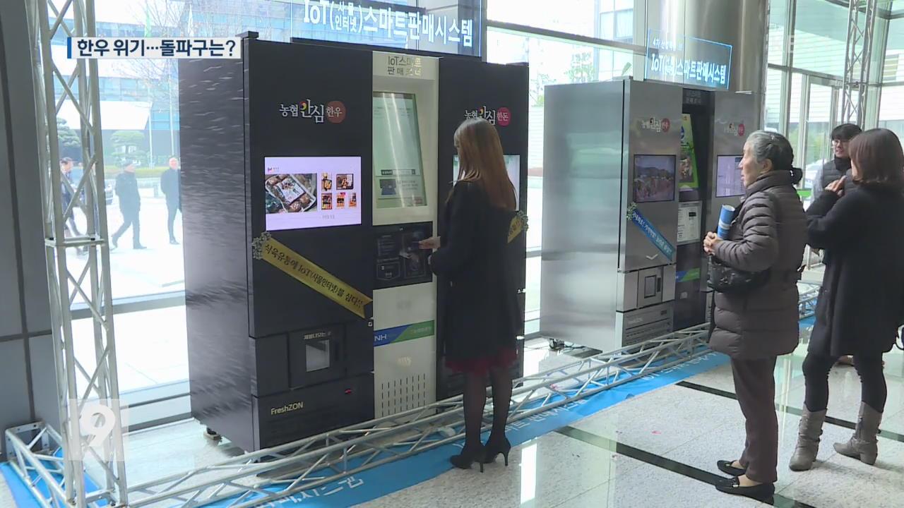 [앵커&리포트] '자판기 한우'에 케이크까지…몸값 낮춘 한우의 생존법
